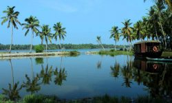 The_Tranquil_Poovar_2254